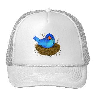 Assentamento azul do pássaro - chapéu boné