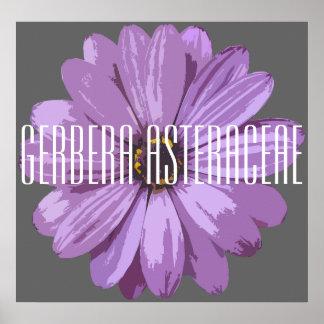 Asteraceae do Gerbera - poster (Matte)