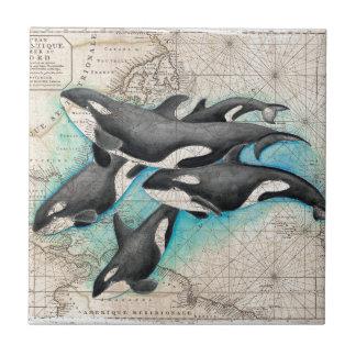 Atlas do mapa da orca