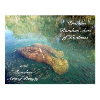 Atos aleatórios do peixe-boi do cartão da bondade