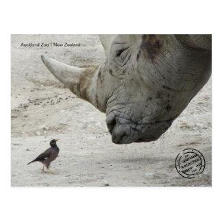 Auckland jardim zoológico (Nova Zelândia cartão Cartão Postal
