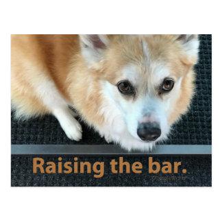 Aumentando o cartão do Corgi do bar