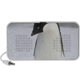 Auto-falante sós do Portable do pinguim Caixinhas De Som Para Notebook