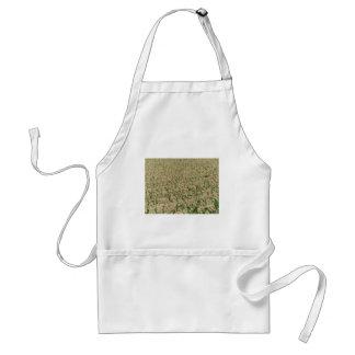 Avental Campo do milho do milho verde na fase inicial