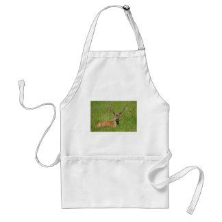 Avental Cervos de fallow do fanfarrão na grama