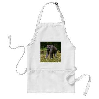 Avental Chimpanzé na grama de florescência