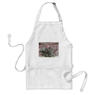 Avental Cultivar antigo da flor do japonica da camélia