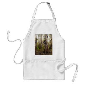 Avental Epiphyte Bromeliad na floresta de Florida