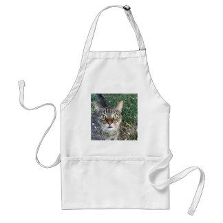 """Avental """"Hey você"""" diz este gato"""