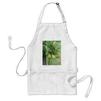 Avental Peras verdes que penduram em uma árvore de pera