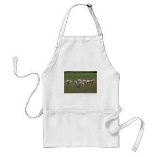 Avental Rebanho dos carneiros