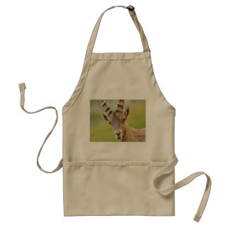 Avental Retrato de um íbex