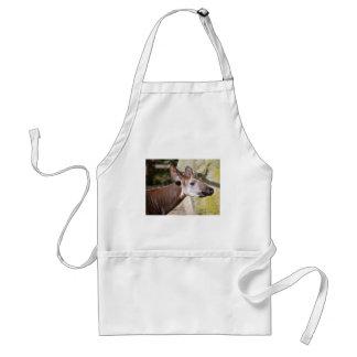 Avental Retrato do okapi (johnstoni do Okapia)