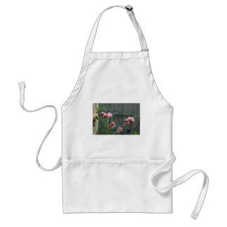 Avental Rosa que crescem em um jardim de Cotswold