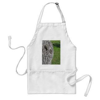 Avental Tronco de árvore da pera contra o fundo verde