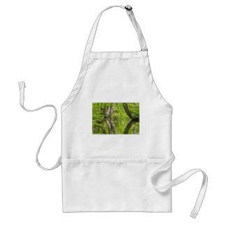 Avental Troncos de árvore da faia com água na floresta do