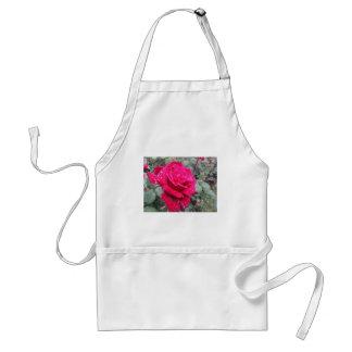Avental Única flor da rosa vermelha com gotas de água