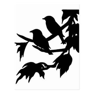 aves canoras cartão postal