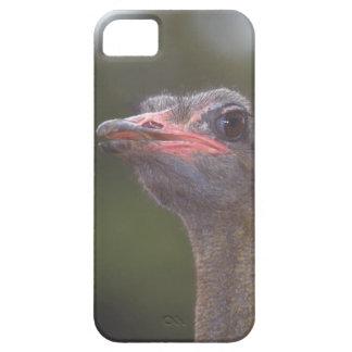 Avestruz bonita do caso bonito do iPhone 5 Capas Para iPhone 5