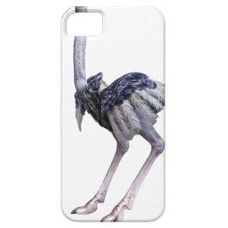 Avestruz Capa Barely There Para iPhone 5