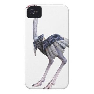 Avestruz Capa Para iPhone