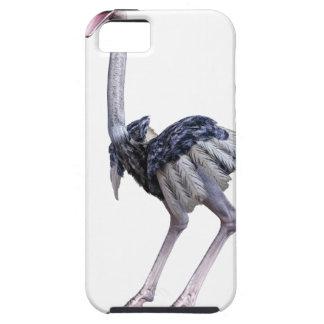 Avestruz Capas Para iPhone 5