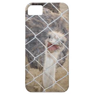Avestruz irritada mim capa de telefone capas para iPhone 5