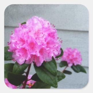 Azálea cor-de-rosa adesivo quadrado