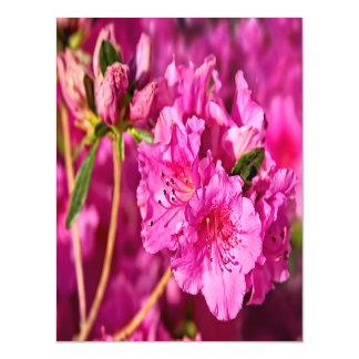 Azáleas cor-de-rosa