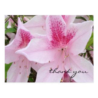 Azáleas cor-de-rosa macias - obrigado cartão