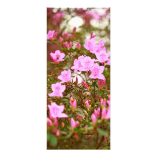 Azáleas que florescem na primavera 10.16 x 22.86cm panfleto