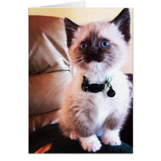 Azul adorável fotografia mascarada Eyed do gatinho Cartão Comemorativo