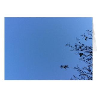 Azul de Carolina, cartão