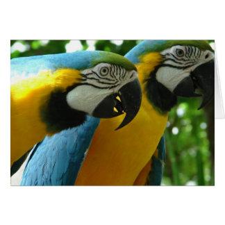 Azul e cartão do Macaw do ouro