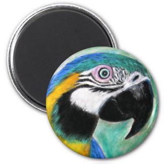 Azul e ímã do Macaw do ouro Ímã Redondo 5.08cm