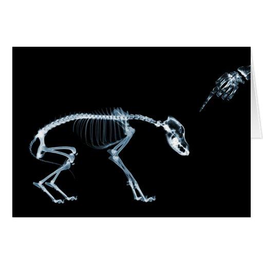 Azul mau do cão dos esqueletos do raio X Cartão