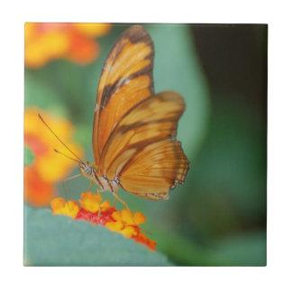 Azulejo alaranjado minúsculo da borboleta