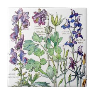 Azulejo aquilégia botânico das flores do