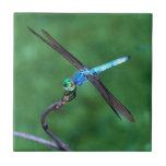 Azulejo azul bonito da foto da libélula