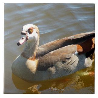 Azulejo bonito do pato