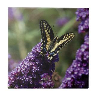 Azulejo - borboleta em flores roxas