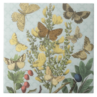 Azulejo botânico das borboletas do vintage…