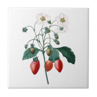 Azulejo botânico de Redoute das morangos