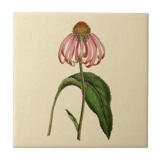 Azulejo botânico de Tan do Echinacea cor-de-rosa
