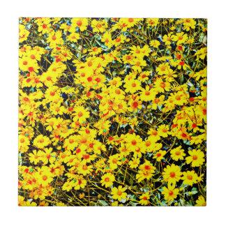 Azulejo cerâmico pequeno da foto da coleção do