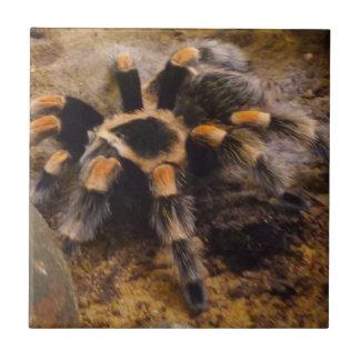 Azulejo cerâmico pequeno da foto do Tarantula