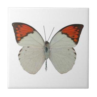 azulejo da borboleta 212