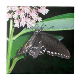 Azulejo da borboleta da noite