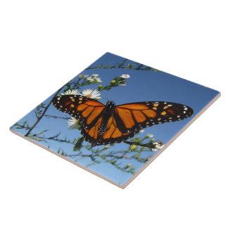 Azulejo da borboleta de monarca