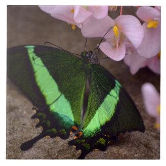 Azulejo da borboleta de Swallowtail